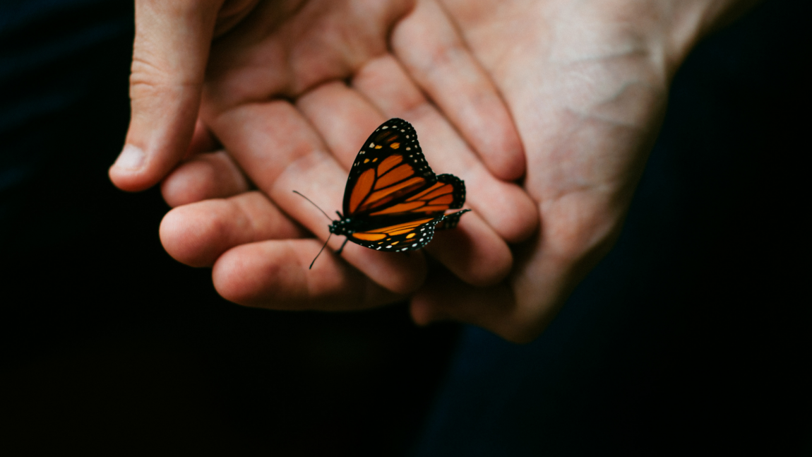 Butterfly on hands representing a permanent transformation